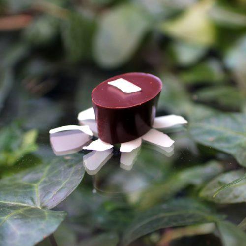 Coco chocolat bio